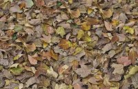 Forbo Flotex Image 000509 autumn leaves - green, 000509 autumn leaves - green