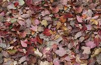 Forbo Flotex Image 000509 autumn leaves - green, 000532 red leaves