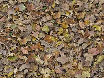 Forbo Flotex Image 000509 autumn leaves - green